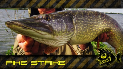 Pike Strike Video