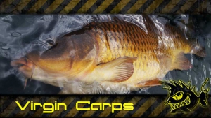 Virgin Carp - Karpfenangeln in Bergseen
